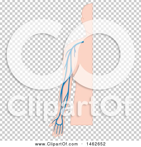 Transparent clip art background preview #COLLC1462652