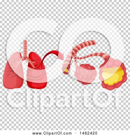 Transparent clip art background preview #COLLC1462420