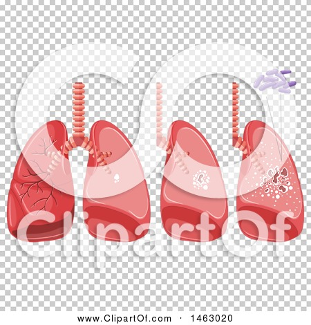 Transparent clip art background preview #COLLC1463020
