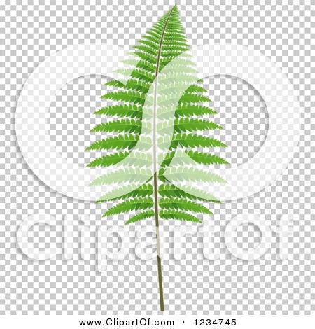 Transparent clip art background preview #COLLC1234745