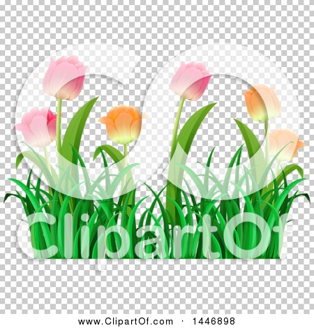 Transparent clip art background preview #COLLC1446898