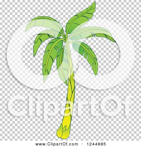Transparent clip art background preview #COLLC1244885