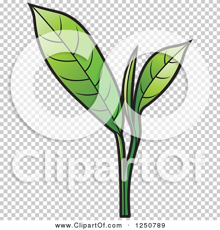 Clipart of a Green Tea Leaf Plant - Royalty Free Vector ...