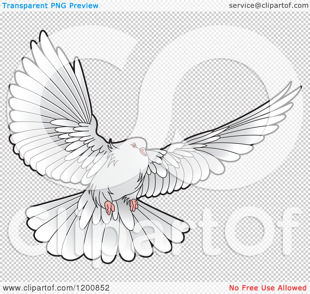 Royalty Free Dove In Sky Blue Background Clip Art Image Picture ...