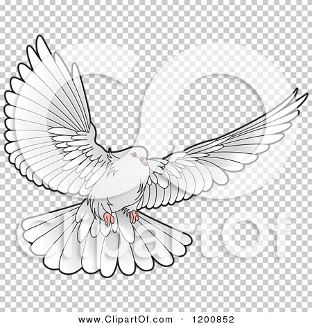 Transparent clip art background preview #COLLC1200852