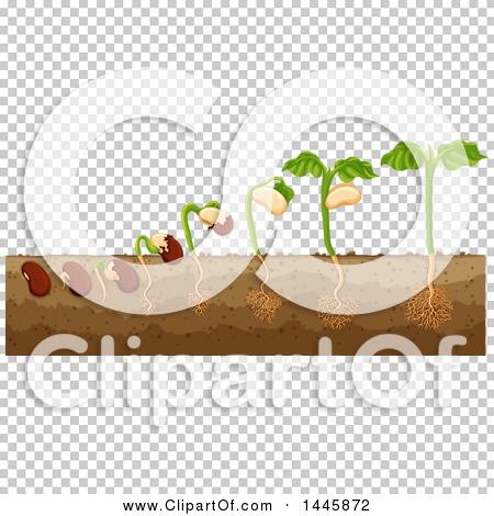 Transparent clip art background preview #COLLC1445872