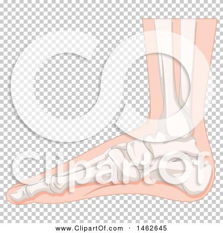 Transparent clip art background preview #COLLC1462645