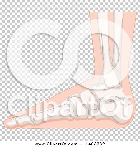 Transparent clip art background preview #COLLC1463362