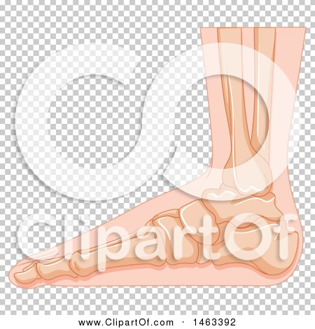 Transparent clip art background preview #COLLC1463392