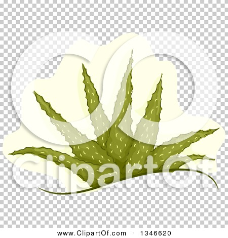 Transparent clip art background preview #COLLC1346620
