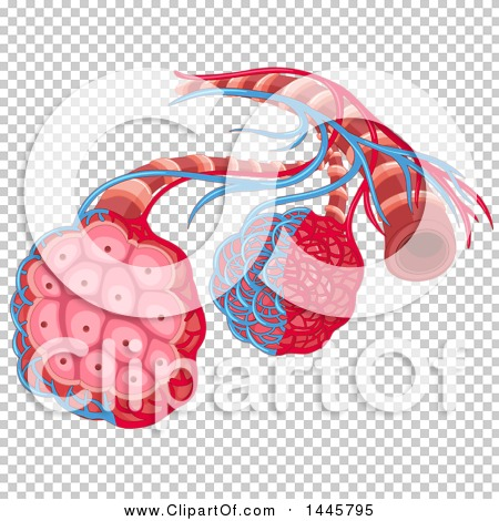 Transparent clip art background preview #COLLC1445795