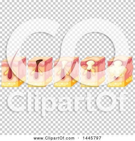 Transparent clip art background preview #COLLC1445797