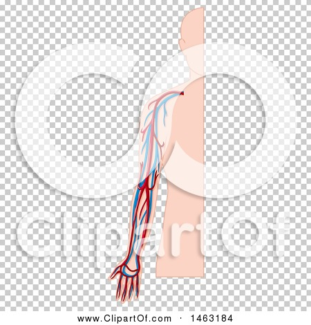 Transparent clip art background preview #COLLC1463184