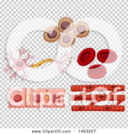 Transparent clip art background preview #COLLC1463207