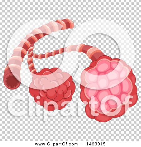 Transparent clip art background preview #COLLC1463015