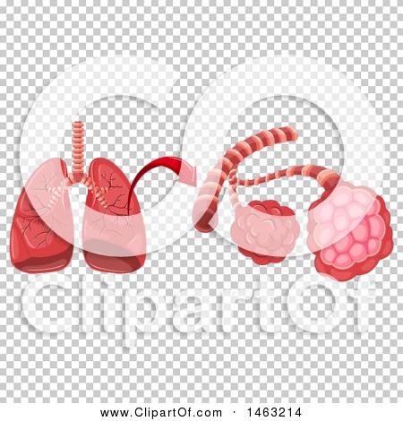Transparent clip art background preview #COLLC1463214
