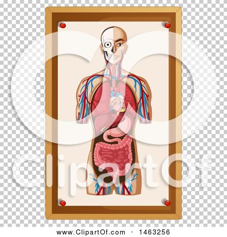 Transparent clip art background preview #COLLC1463256
