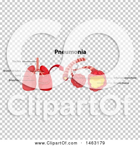 Transparent clip art background preview #COLLC1463179