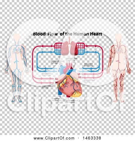 Transparent clip art background preview #COLLC1463338