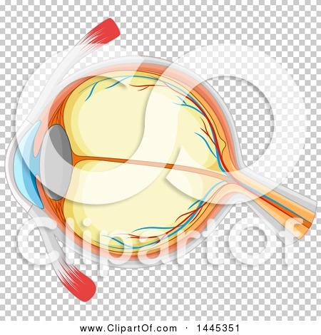 Transparent clip art background preview #COLLC1445351