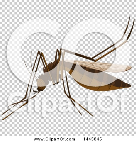 Transparent clip art background preview #COLLC1445845
