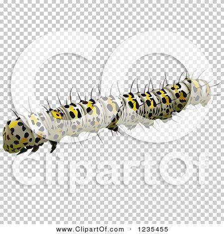 Transparent clip art background preview #COLLC1235455