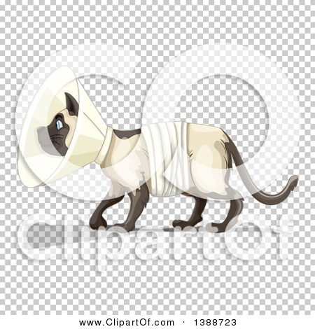 Transparent clip art background preview #COLLC1388723