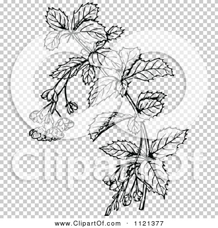 Transparent clip art background preview #COLLC1121377