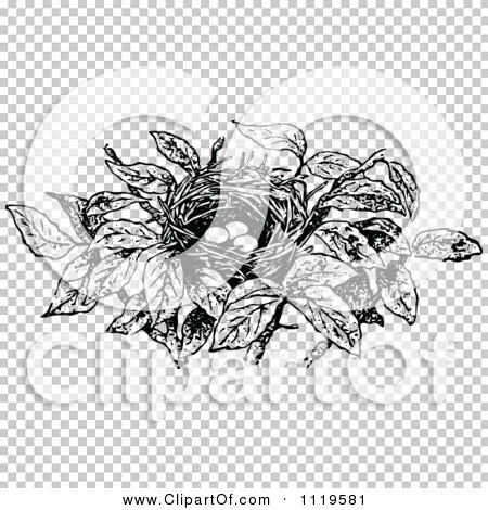Transparent clip art background preview #COLLC1119581