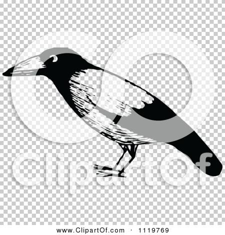 Transparent clip art background preview #COLLC1119769