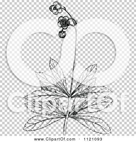 Transparent clip art background preview #COLLC1121093
