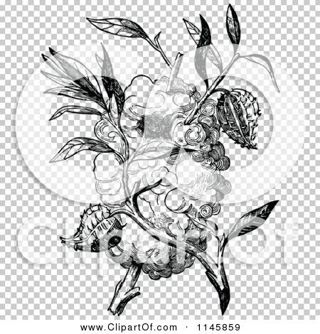 Transparent clip art background preview #COLLC1145859