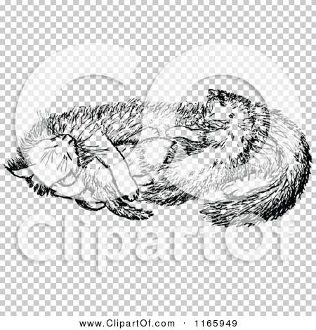 Transparent clip art background preview #COLLC1165949