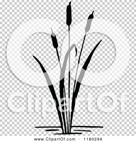 Transparent clip art background preview #COLLC1180299
