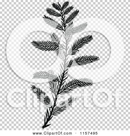 Transparent clip art background preview #COLLC1157495