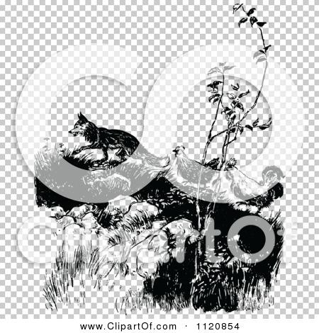 Transparent clip art background preview #COLLC1120854