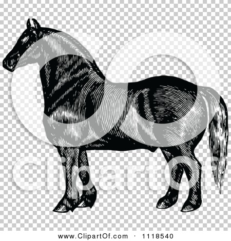 Transparent clip art background preview #COLLC1118540