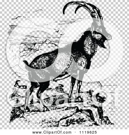 Transparent clip art background preview #COLLC1119625