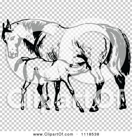 Transparent clip art background preview #COLLC1118538