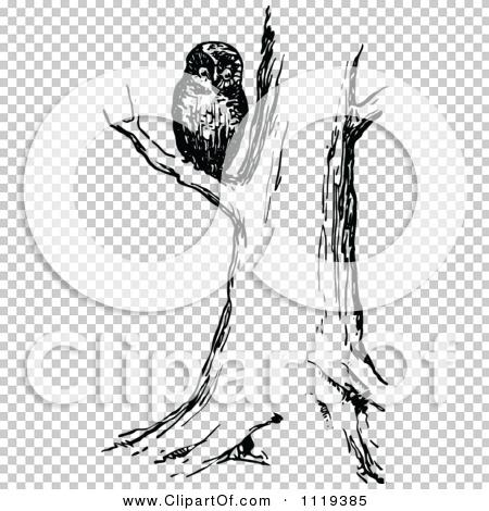 Transparent clip art background preview #COLLC1119385