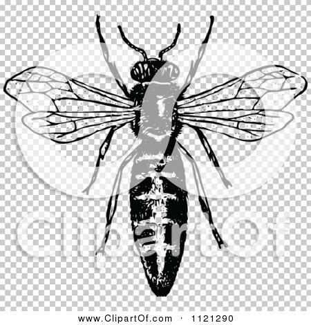 Clipart Of A Retro Vintage Black And White Queen Bee ...