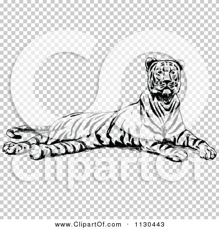 Transparent clip art background preview #COLLC1130443