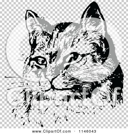 Transparent clip art background preview #COLLC1146043