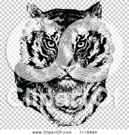 Transparent clip art background preview #COLLC1116894