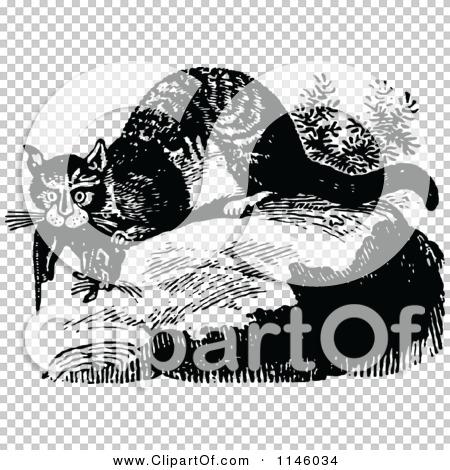 Transparent clip art background preview #COLLC1146034