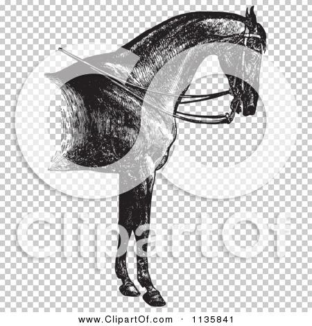 Transparent clip art background preview #COLLC1135841