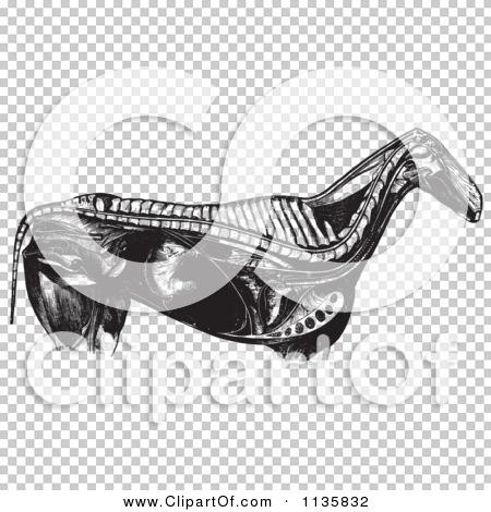 Transparent clip art background preview #COLLC1135832