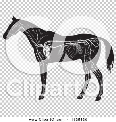Transparent clip art background preview #COLLC1135830
