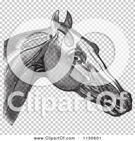 Transparent clip art background preview #COLLC1130601