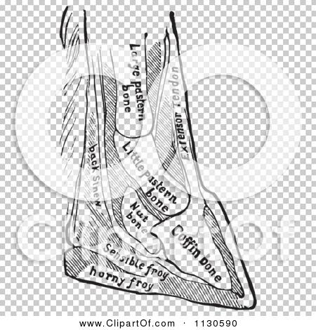Transparent clip art background preview #COLLC1130590